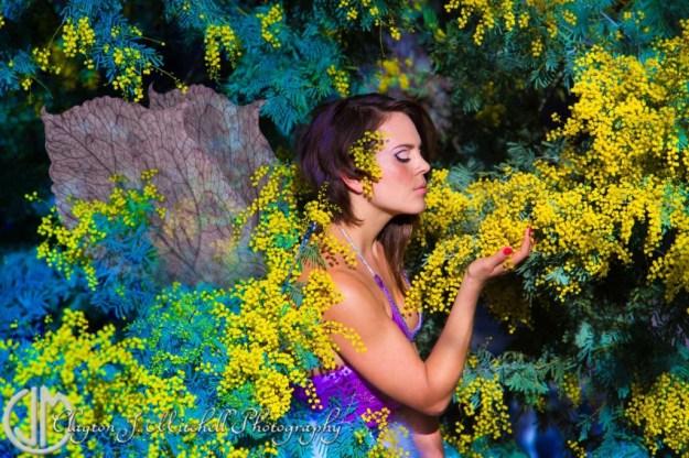 mimosa fairy