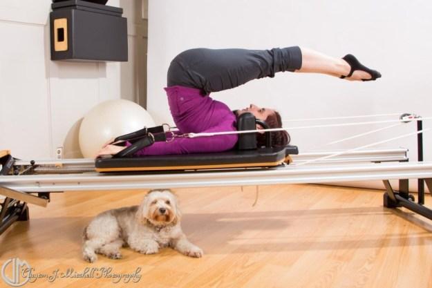 dog at the pilates studio