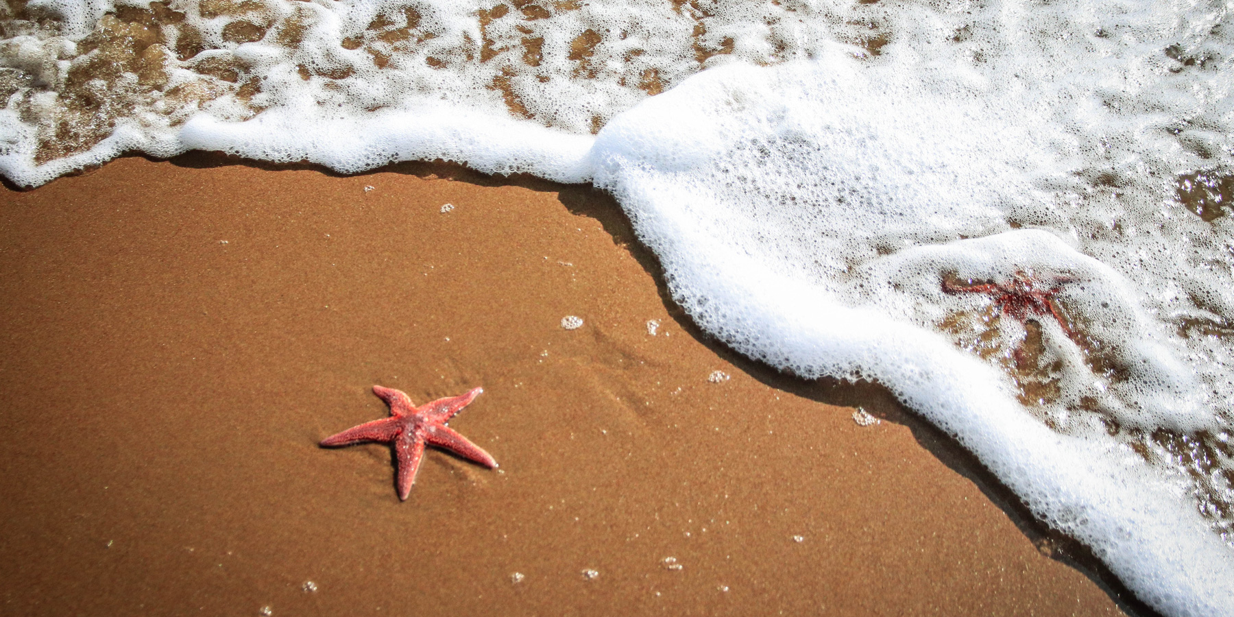 What's Your Starfish Story?