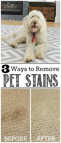 carpet cleaning tips pet stains  Floor Matttroy