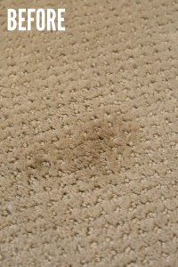 How to Remove Pet Stains from Carpet