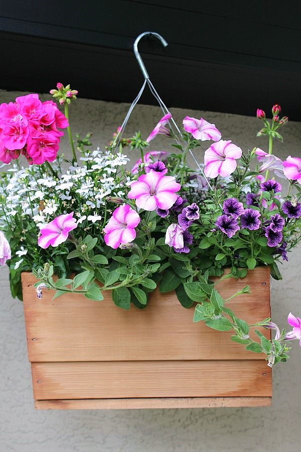 care for hanging baskets and planters