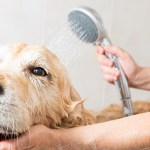 Reasons To Hire Residential Pet Cleaners