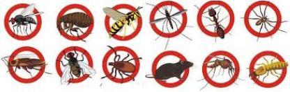 شركة مكافحة حشرات بالمظيلف