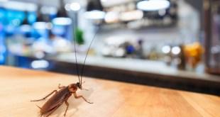 شركة مكافحة حشرات بالقمحة