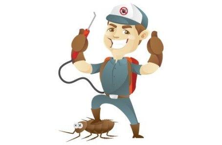شركة مكافحة حشرات بالقوز