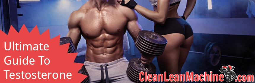 Ultimate Guide To Testosterone - What is testosterone and why you need testosterone