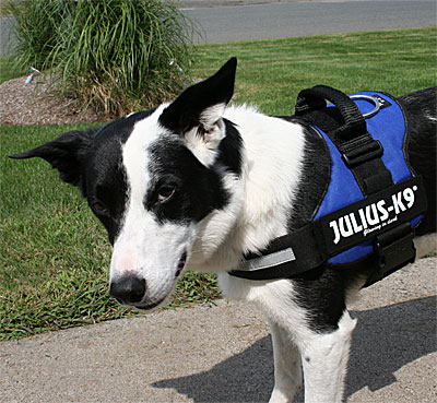 Product Details Julius K9 Original Power Harness