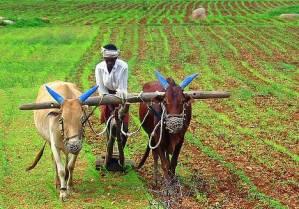 farming-india