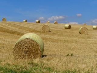 biomass-fuel