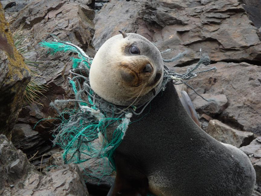 plastic-pollution-aquatic-organisms
