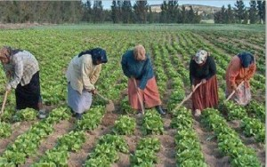 palestine-agriculture
