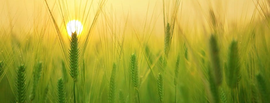 sustainability-agriculture