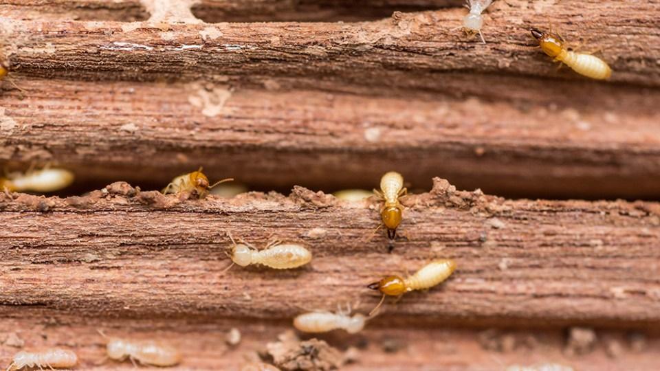 termite-control-system