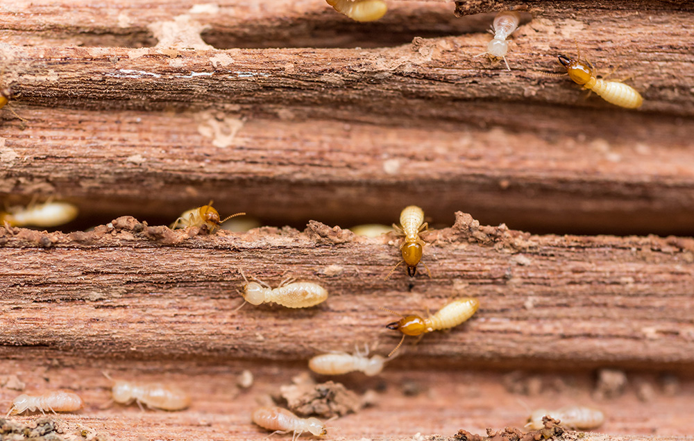 9 Warning Signs Of A Termite Problem Blogging Hub