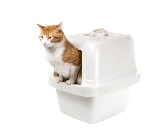 automatic-litter-box