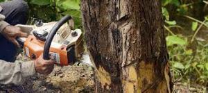 roof-repair-tree-removal