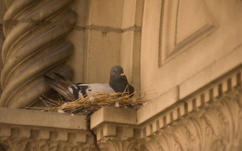nesting-birds-UK