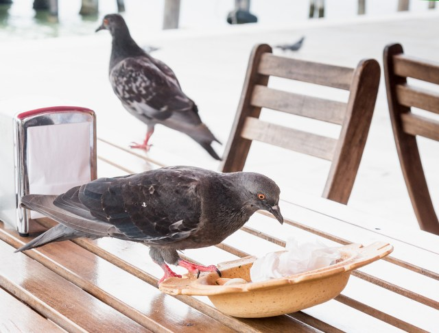 bird-droppings-health-risks