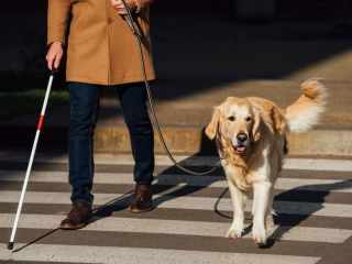 assistance-dogs