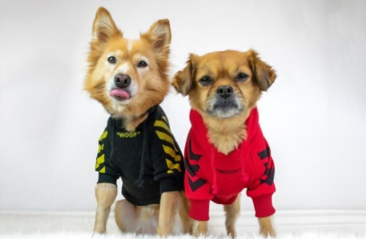 benefits of doggie clothes