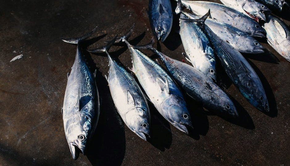 setting up a tuna canning firm