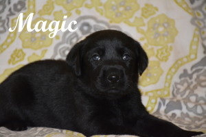 Magic 4 weeks.