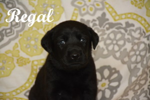 Regal 4 weeks.