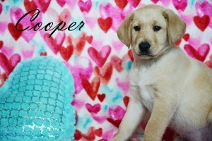 Cooper8wks