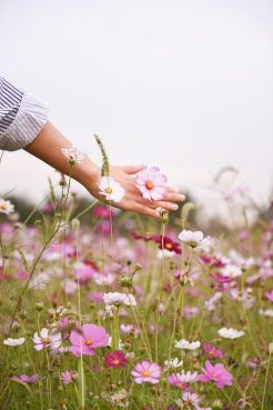 lady's hand touching purple flowers in a field