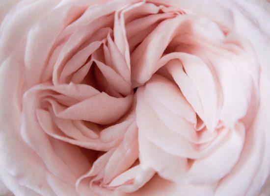 pink feminine flower - Clear Sky Center