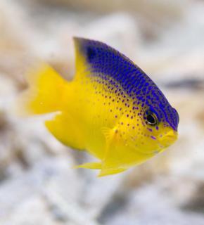 LR_2Fish_closeup