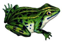 Vintage-Frog-Image-GraphicsFairy