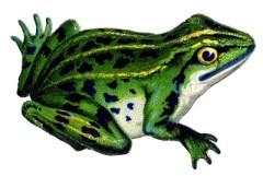 Vintage-Frog-Image-GraphicsFairy