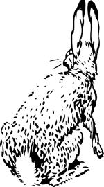 rabbit-ears2
