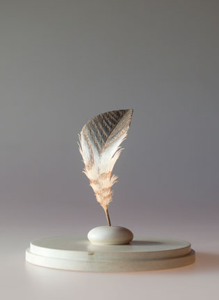 Feather-11,883