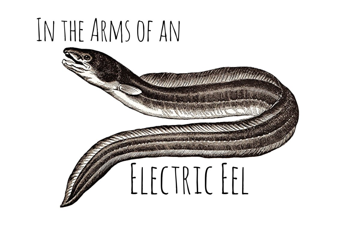 IN THE ARMS OF AN ELECTRIC EEL by Anna Keeler