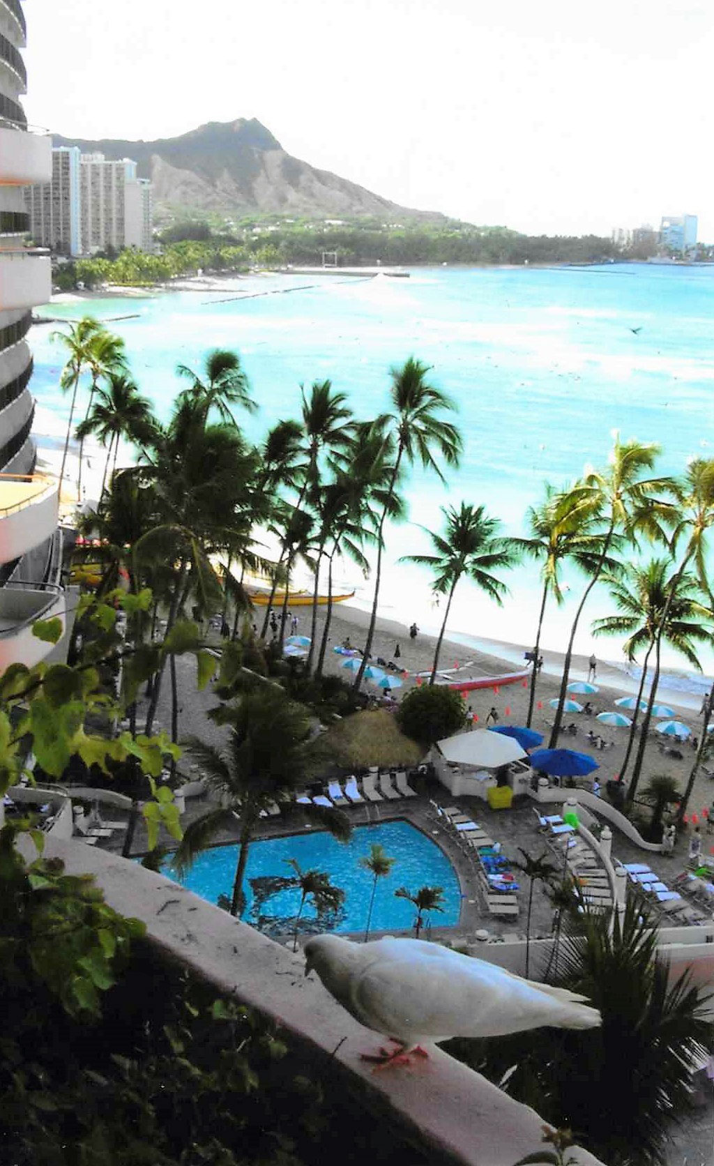 Hawaii In Living Color A Travel Essay By Ed Meek Cleaver Magazine