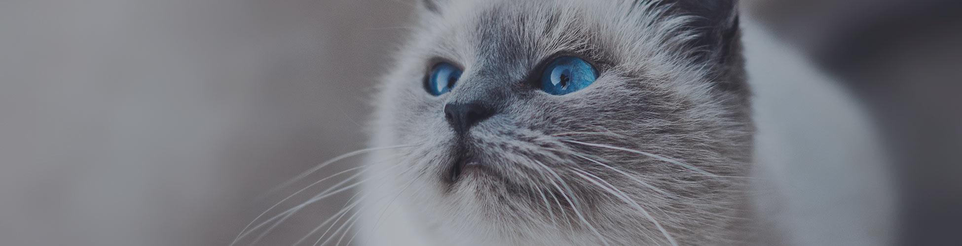 Cleeve cats cat