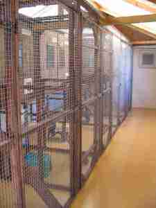Cleeve Cats Cattery inside