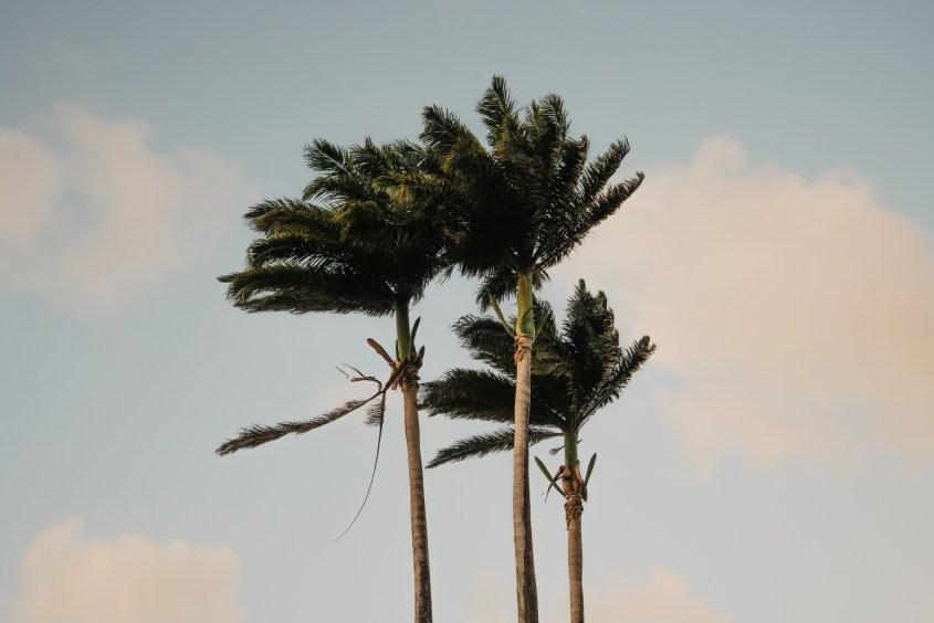 Pointe du bout, Martinique