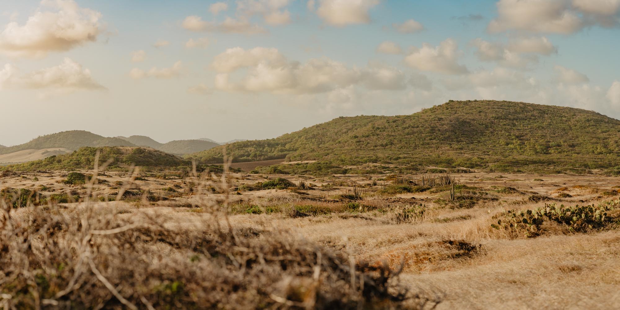 Savane des pétrifications, Martinique