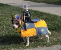 Dogs in costume for Halloween