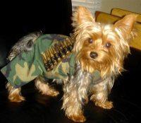 Battle Dog? - German Shepherd Dog Forums