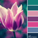 Purple tulip colour scheme