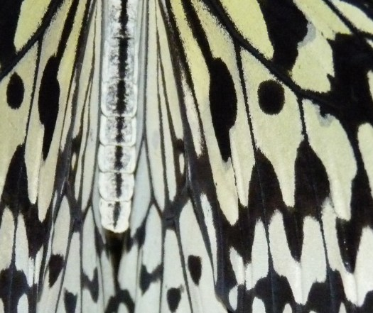 Butterfly under magnification