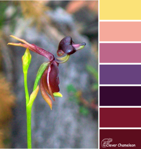 Flying Duck Orchid color scheme from Clever Chameleon