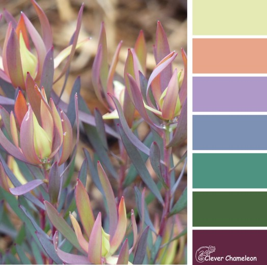 Lovely Leucadendron color scheme from Clever Chameleon