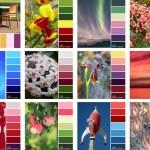 Colour Inspiration Collection 5