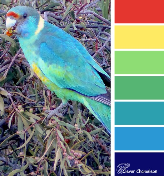 Mallee Ringneck Parrot color scheme from Clever Chameleon